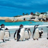 Beautiful Boulders Beach - Simons Town